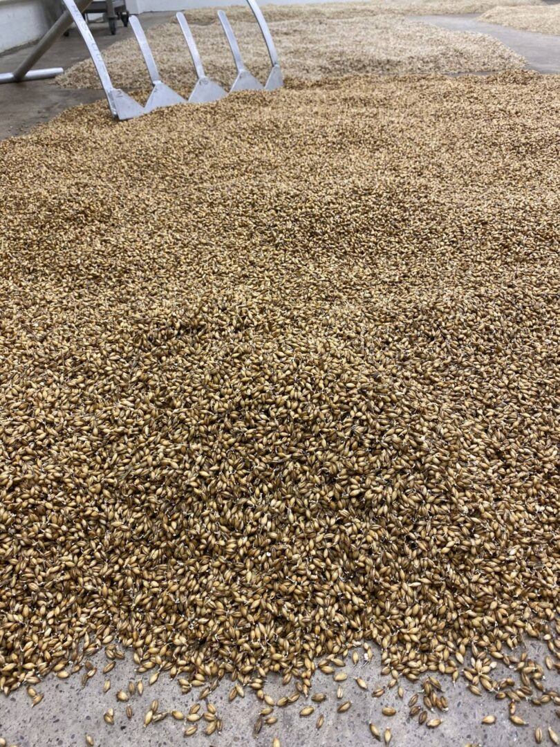 our malting process picture
